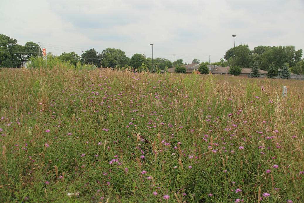 Photo of a field green with meadow grasses and flowers. Proposed site where new planned housing project to be constructed in East London. A planned affordable housing project.